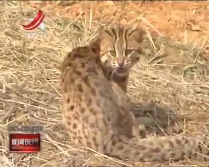 国家一级保护动物-360视频搜索