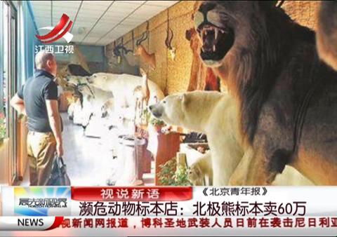 濒危动物标本店:北极熊标本卖60万
