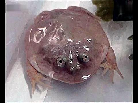 世界上最稀奇古怪的动物集